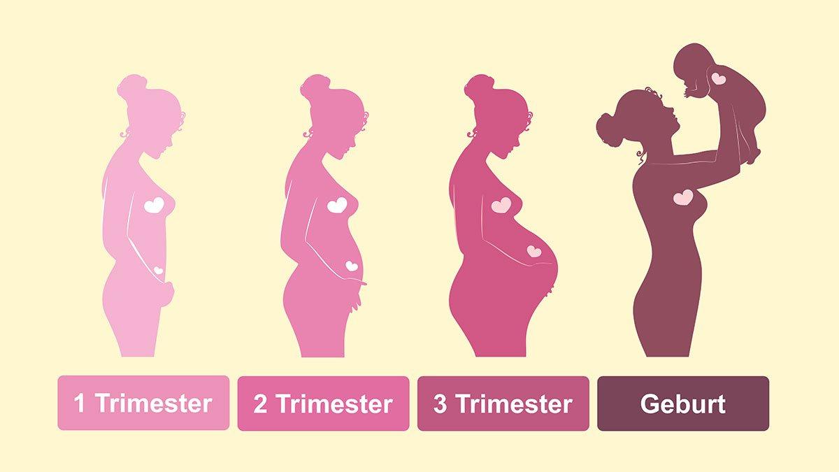 Infografik zur Entwicklung der Schwangerschaft