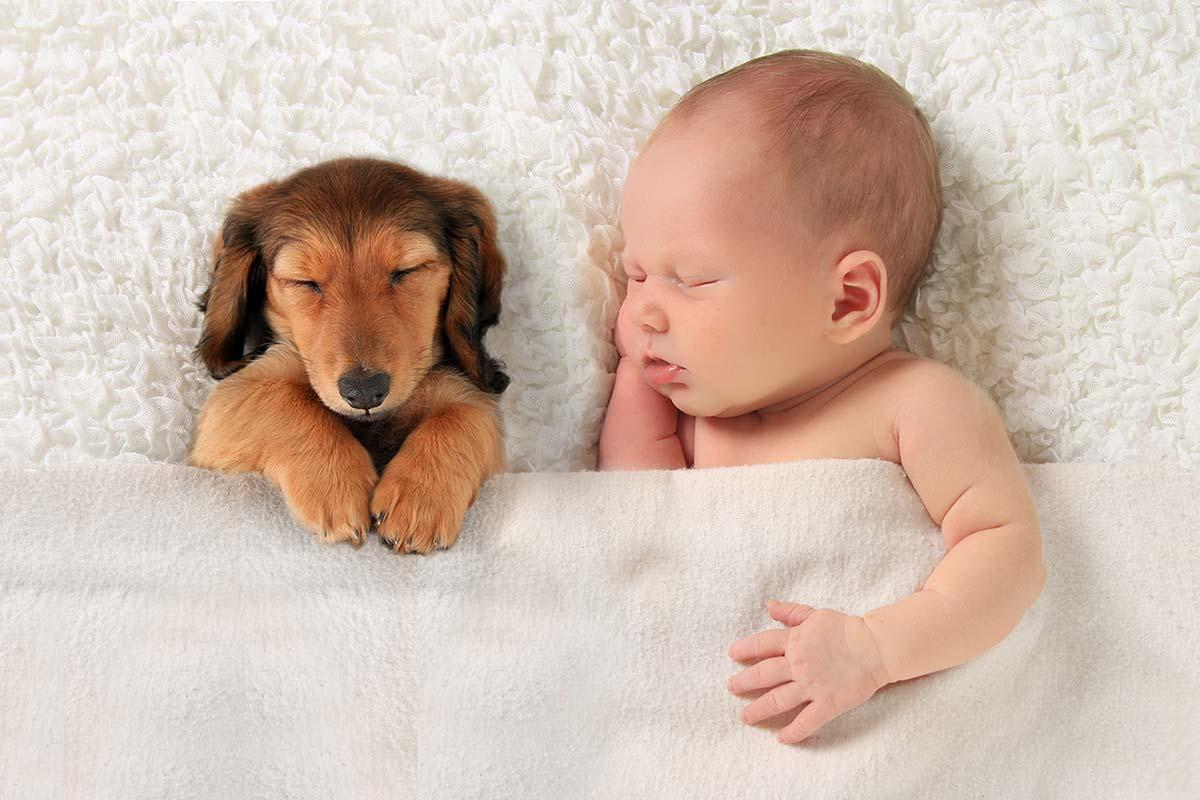 In der Schwangerschaft das Haustier auf das Baby vorbereiten